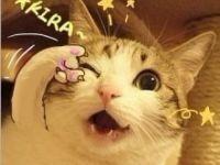 qq蜜桃猫表情包大图