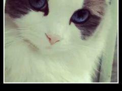 猫斗图表情包带字