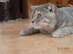 猫斗图配字表情包