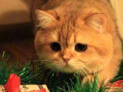 难过橘猫表情包原图