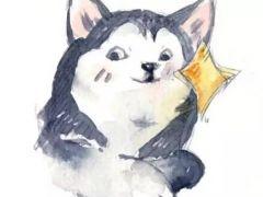 情侣斗图表情包可爱猫