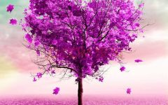 爱情图片紫色的