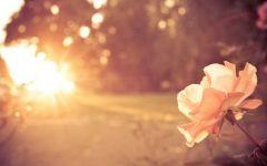 早安海边浪漫图片唯美图片