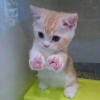 微信头像猫猫