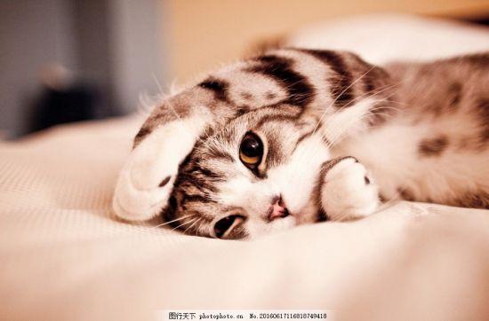 猫咪可爱图片壁纸高清