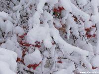 冬雪一枝梅实景微信头像好看又适合