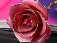 微信头像玫瑰图片大全