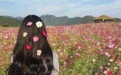 女生带花的微信头像