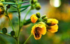 唯美微信头像花卉图片