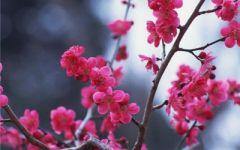 头像微信风景花卉图片