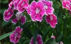 一簇花花卉微信头像