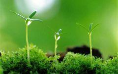 微信头像植物发芽