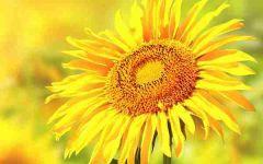 微信头像大全花朵