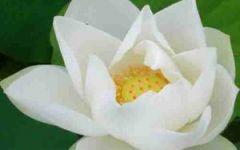 漂亮的莲花微信头像图片