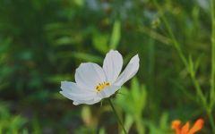 女生微信头像花朵风景图片