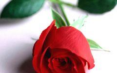 玫瑰花的微信头像