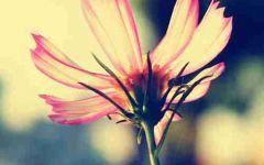 花的头像微信头像高清头像