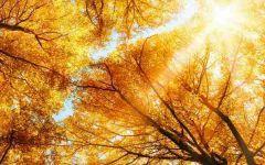 微信头像树林