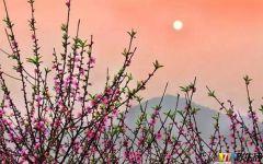 浪漫粉色桃花唯美图片