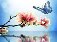 蝴蝶浪漫唯美图片大全