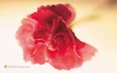 红色唯美花图片简笔