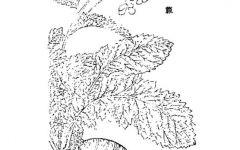 立冬树简笔画