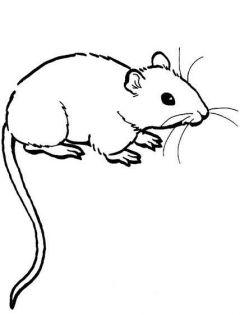 儿童简笔画老鼠图片
