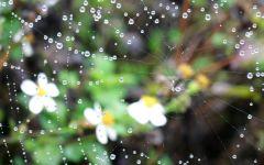 伤感唯美雨天花草图片大全