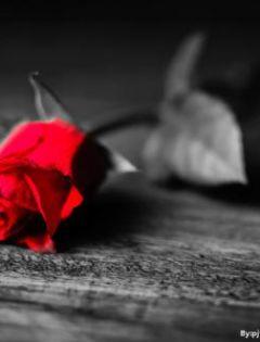 玫瑰花唯美伤感图片带字
