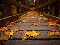 秋天落叶唯美伤感图片大全