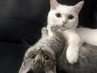 两只猫咪情侣图片