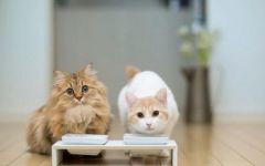 猫咪温馨情侣图片