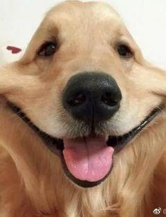 捏狗狗脸情侣图片
