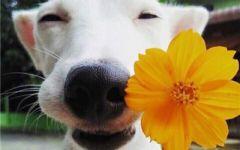 狗头像情侣图片大全可爱