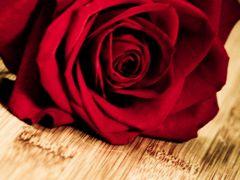 浪漫唯美爱情壁纸
