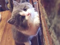 可爱情侣猫咪微信头像