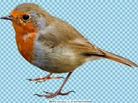 小鸟图片大全可爱图片大全
