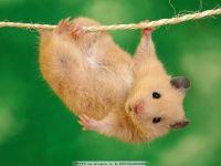 老鼠图片大全可爱图片