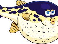 胖鱼图片大全可爱图片