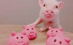 小粉猪头像可爱图片