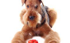 大狗图片可爱图片