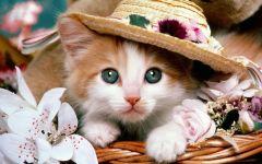 可爱图片猫咪图片