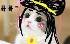 可爱图片猫咪带字女