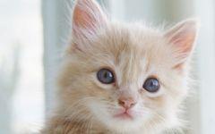 呆萌小猫图片大全可爱图片大全