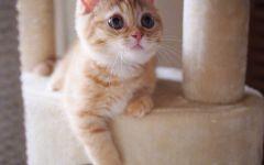 小猫图片大全可爱图片大全