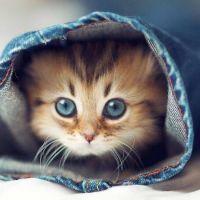 小猫微信头像