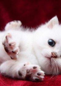 可爱猫照片