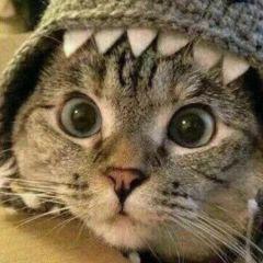 动物微信头像