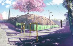 唯美动漫图片樱花