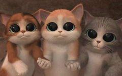 可爱的凯t猫动漫图片